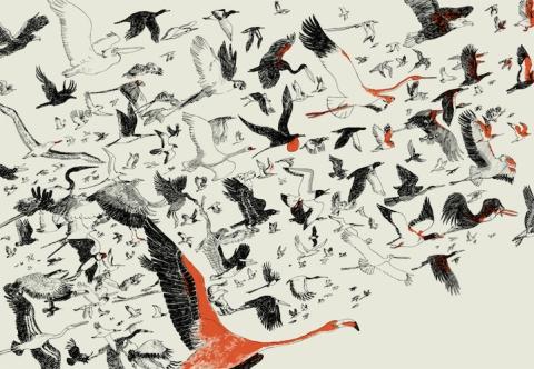 roi-des-oiseaux-3