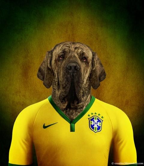 soccer nation dog brasil