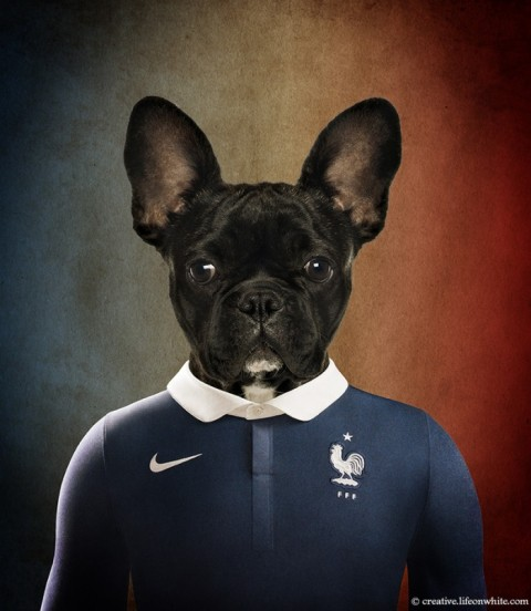 soccer nation dog france