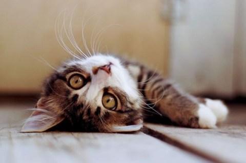 J'ai mis une photo de chaton tout mimi pour illustrer.