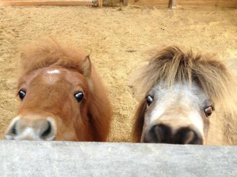 Du coup je vous mets des poneys. Plus je côtoie des ados, plus ils me font penser aux poneys.