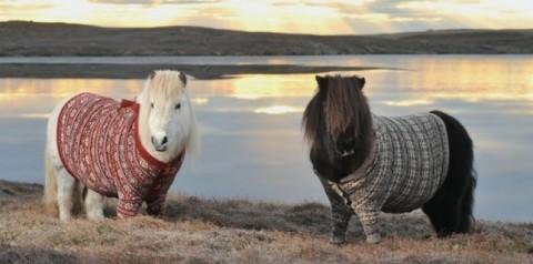 Leurs choix vestimentaires sont mystérieux.