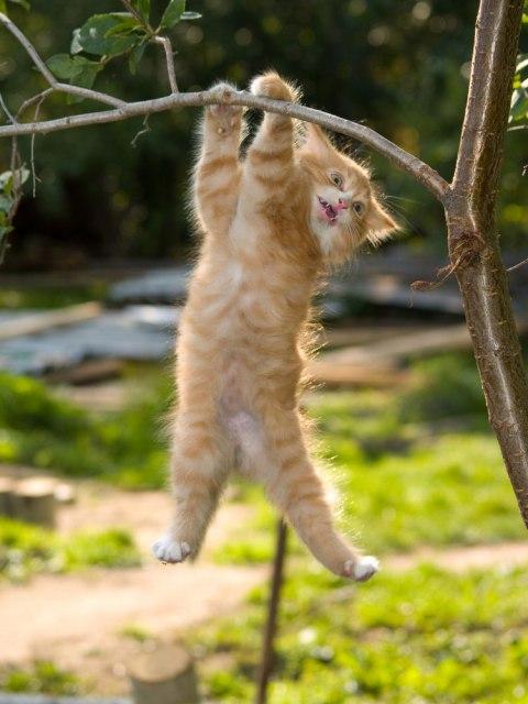 aggressive_kitten