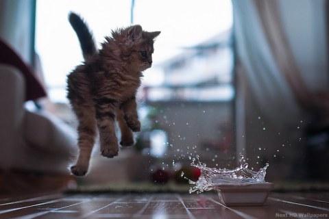 Chat ayant abusé d'Eau Bienveillante.