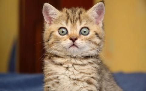 Crotte, ça recommence, le coup des chatons.